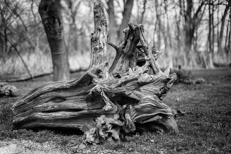 Broken Old tree trunk